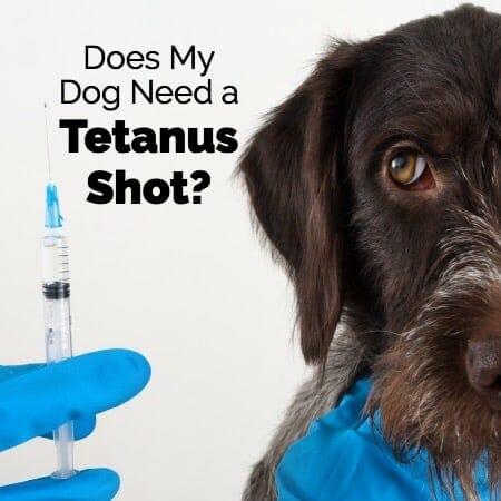 Does My Dog Need a Tetanus Shot?