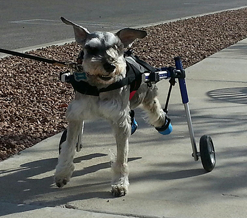 Can A Dog Recover From A Stroke