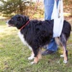 Compensatory Injury in Dogs: When One Pain Leads to Another