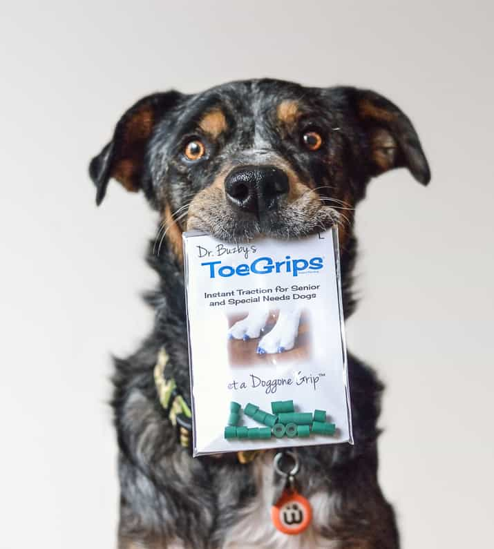 Dog holding package of ToeGrips in mouth