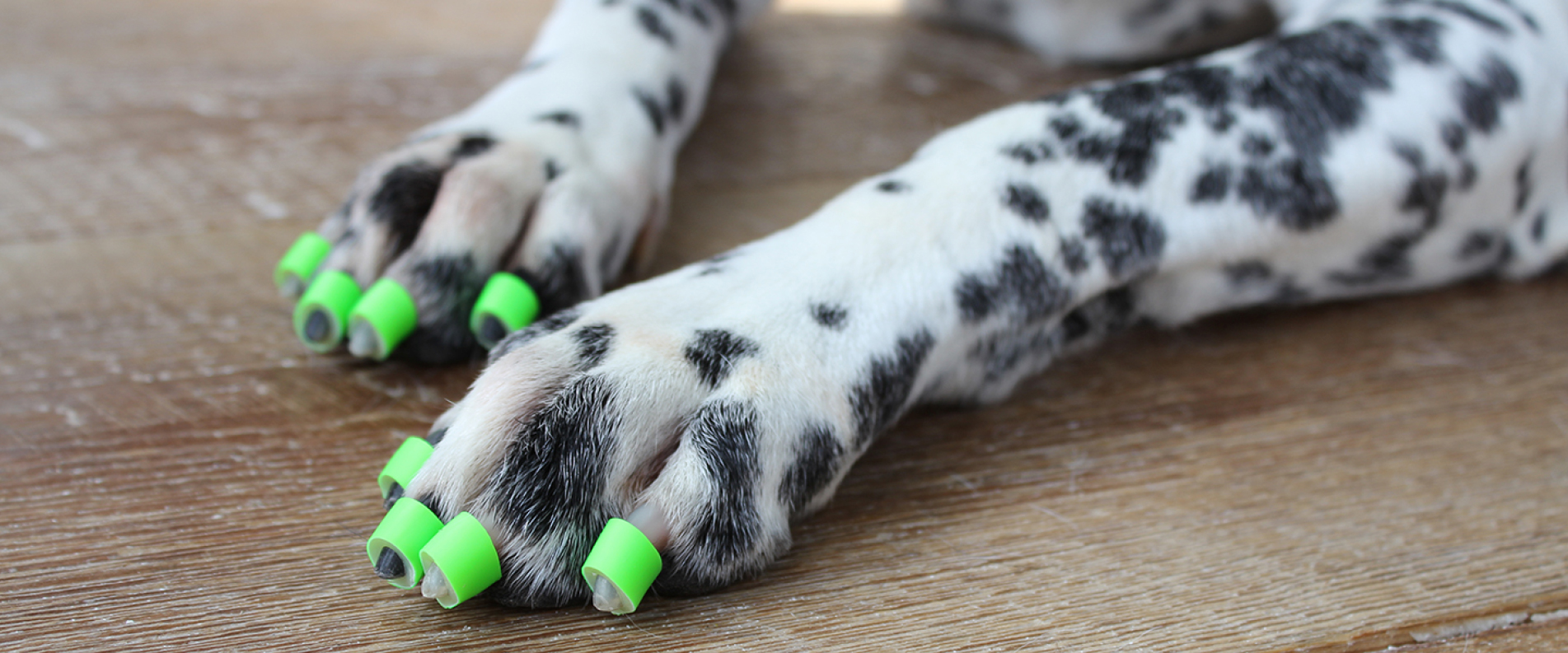 Dog Socks For Wood Floors Carpet Vidalondon