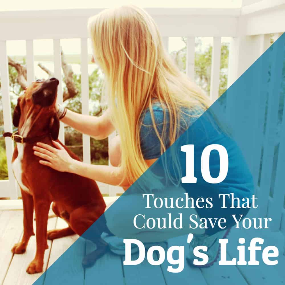 Ten Touches that Could Save Your Dog