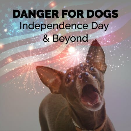 Dangers for Dogs: Independence Day & Beyond