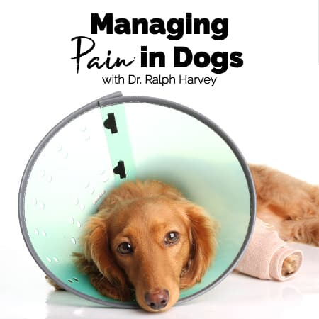 Managing Pain in Dogs with Dr. Ralph Harvey