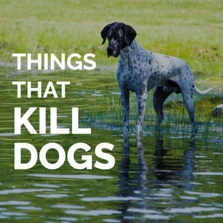 Things That Kill Dogs