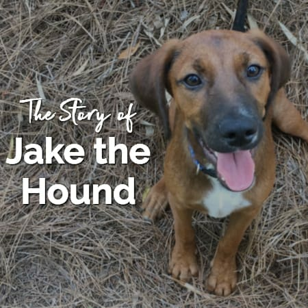 Bringing a New Dog into Your Home — The Story of Jake the Hound