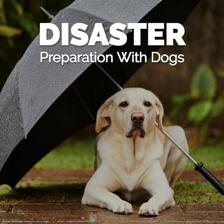 Disaster Preparation with Dogs