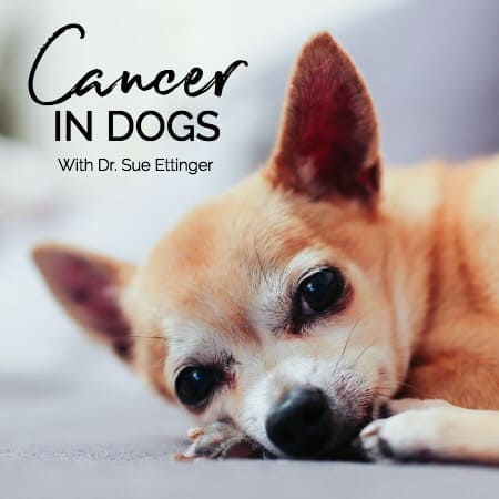The Myths and Misconceptions of Cancer in Dogs with Dr. Sue, Cancer Vet