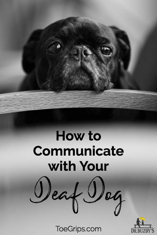 black dog's face and title how to communicate with your deaf dog