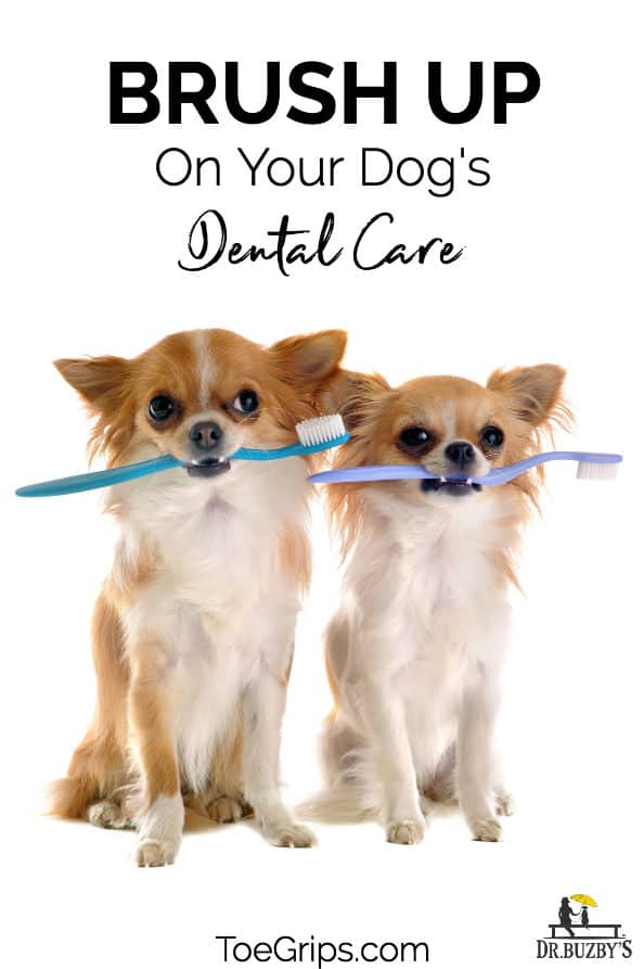 two dogs holding toothbrushes and title brush up on your dog's dental care