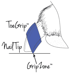 Diagram of a dog's nail wearing a ToeGrip and showing how the non-slip grip makes contact with the floor to create a Grip Zone