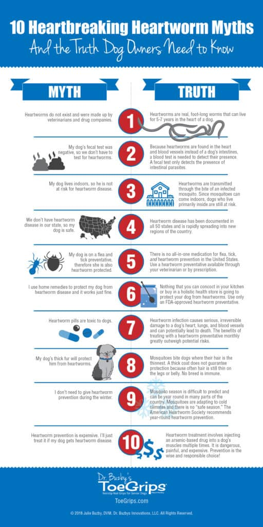 Infographic titled 10 Heartbreaking Heartworm Myths and the truths you need to know about heartworm disease in dogs