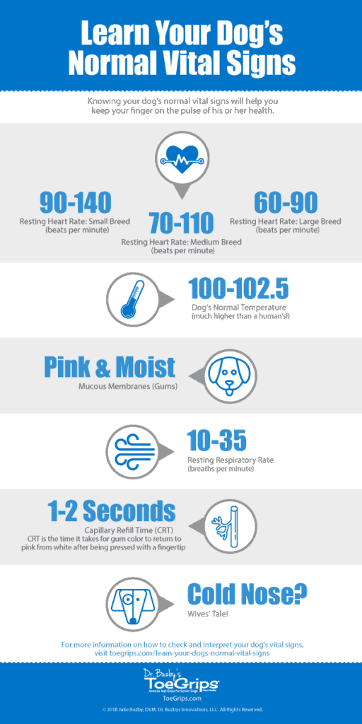 infographic with title learn your dog's vital signs