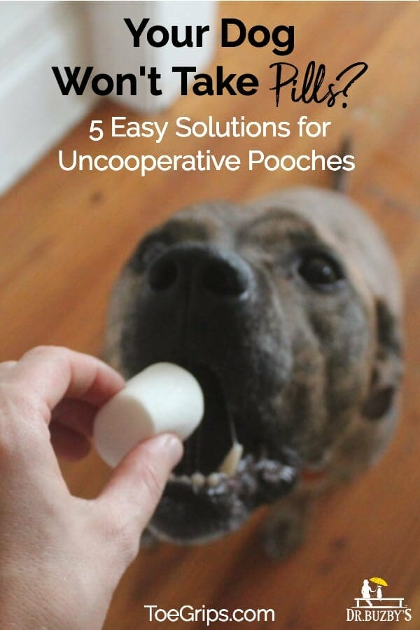dog opening mouth to take a pill and title your dog won't take pills? 5 easy solutions for uncooperative pooches