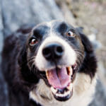 How to Recognize a Dog Tooth Abscess and What to Do About It