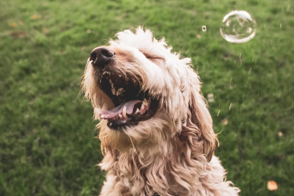 Happy dog with bubbles, photo