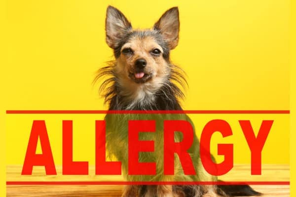 Beyond Benadryl: Allergy Medicine for Dogs - Dr  Buzby's