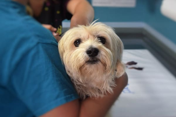 Small dog on vet exam table, photo