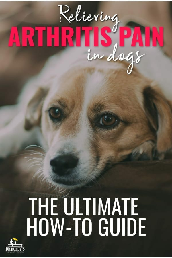 title relieve arthritis pain in dogs and dog's face photo