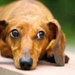 Are Your Dear Old Dog's Back Legs Collapsing? 6 Reasons Why