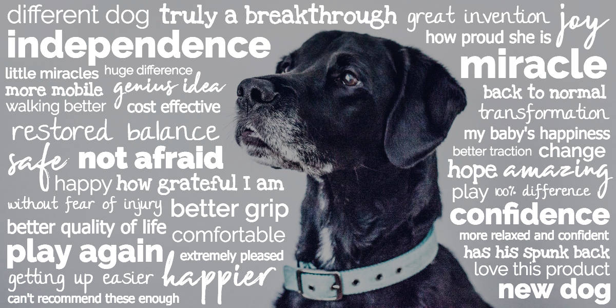 Close-up of black dog's face with positive words that customers have used to in ToeGrips reviews and testimonials to describe ToeGrips such as miracle, confidence, new dog, amazing.