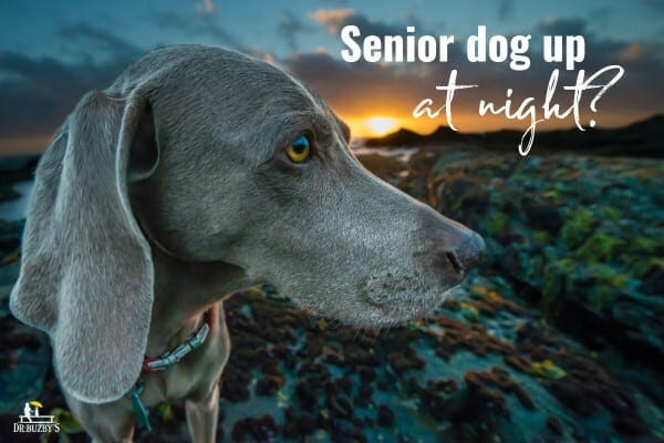 photo old dog and sunset with title senior dog up at night canine cognitive dysfunction