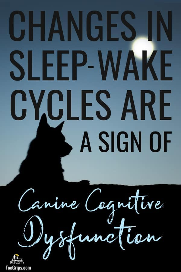 photo silhouette of senior dog and title changes in sleep-wake cycles are a sign of canine cognitive dysfunction