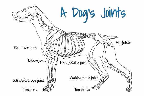 diagram of a dog showing each of the dog's joints