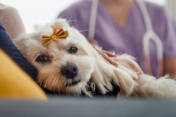 dog at veterinary appointment, photo