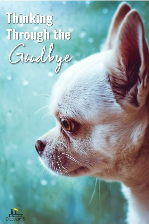 photo of old dog looking out window and title dog euthansia: thinking through the goodbye