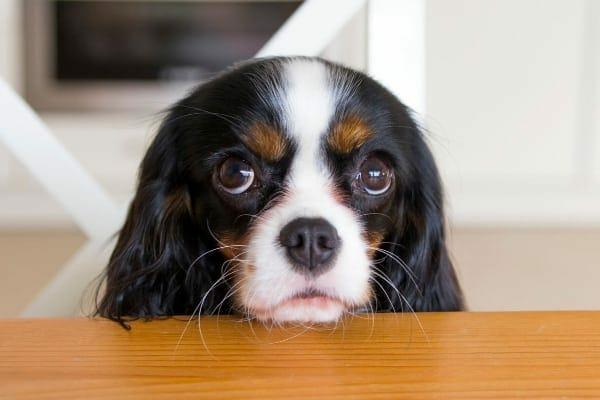 photo dog with puppy dog eyes