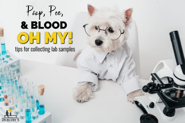 photo dog by microscope and  title dog  poop, pee, and blood samples oh my tips for collecting lab samples