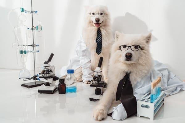 photo two dogs wearing glasses with test tubes and microscopes for conducting dog lab tests