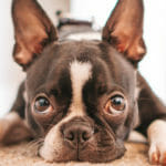 Tramadol for Dogs: A Comprehensive Guide