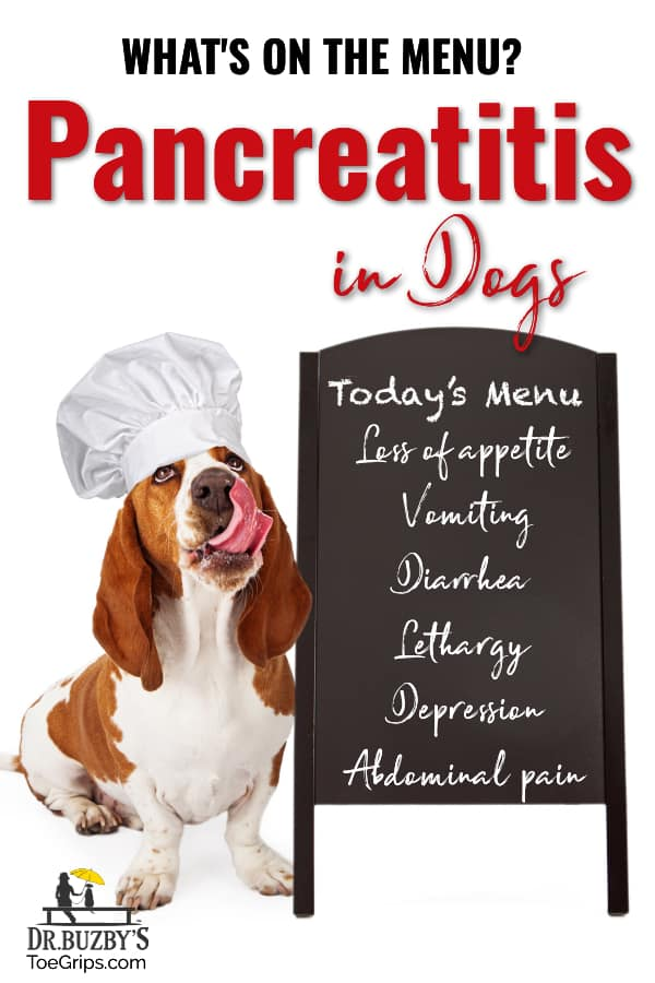 Dog wearing chef's hat beside menu board and title what's on the menu: pancreatitis in dogs, photo