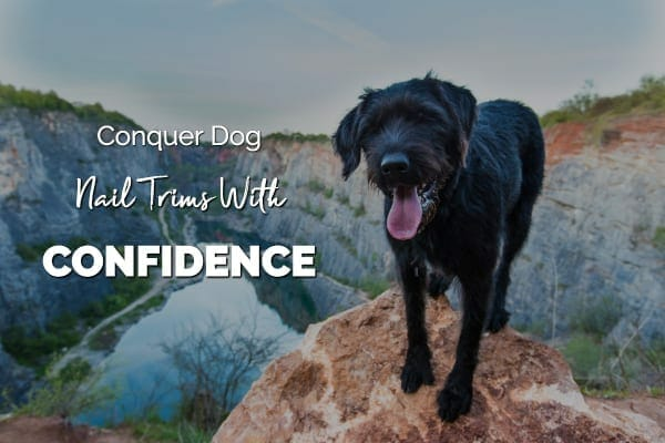dog on rock and title conquer dog nail trims with confidence