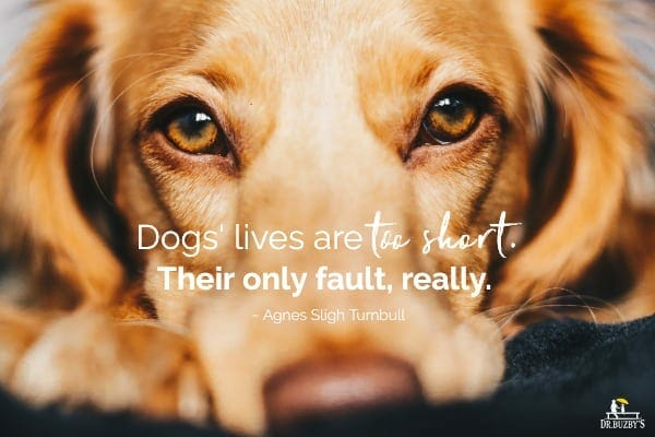 photo of golden dog's face and quote about dog's life being too short