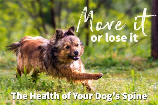 Don't just sit there: Know the health of your dog's spine