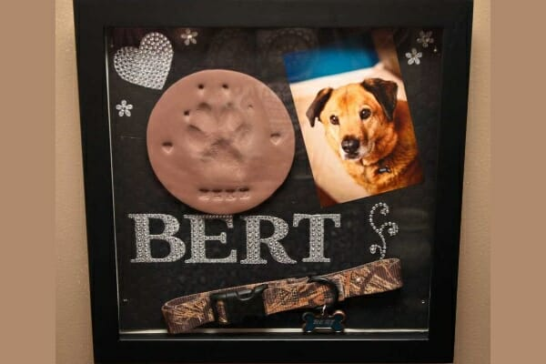 Shadow box with clay paw print, collar and photo of passed pet, photo