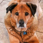 In-Home Dog Euthanasia: Heartfelt Answers to 12 FAQs