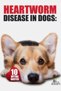 dog and title heartworm disease in dogs: 10 myths busted