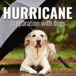 Pets and Hurricanes: 10 Things You Need to Know Before Evacuating with Pets