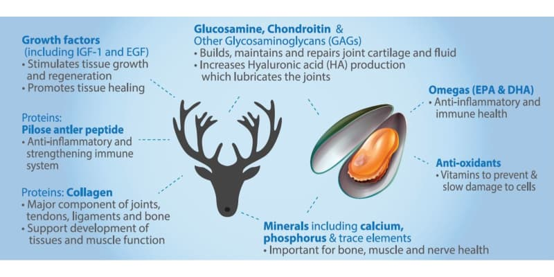 infographic illustrates the 7 benefits of deer antler velvet and green lipped mussel for dogs: growth factors, collagen, glucosamine, chondroitin, omegas, anti-oxidants, minerals