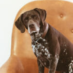 Knuckling in Dogs: Causes and Ways to Help Your Dog