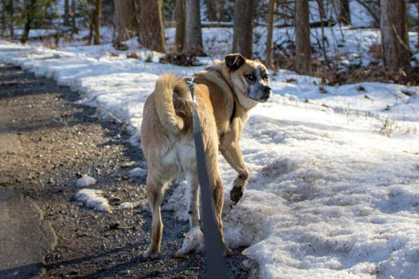dog on a walk in the snow, photo