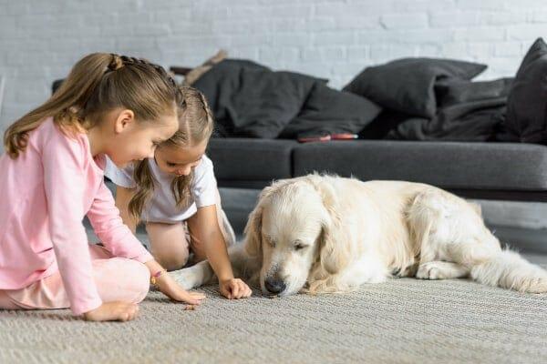 Two girls feeding a dog a treat, photo