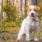 Lyme Disease in Dogs: 10 Facts Every Dog Owner Needs to Know