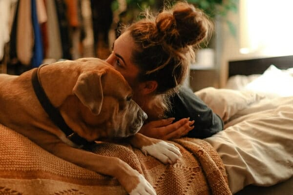 Mastiff mix snuggled on bed with female owner, photo