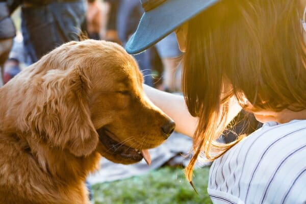 Golden Retriever at the park with his owner, photo