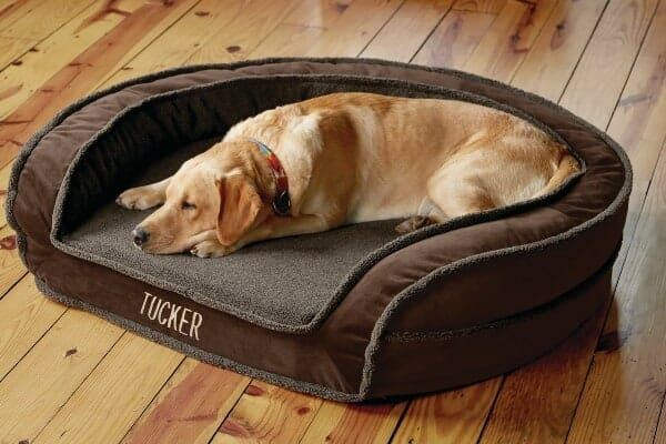 photo of dog sleeping on a comfortable dog bed